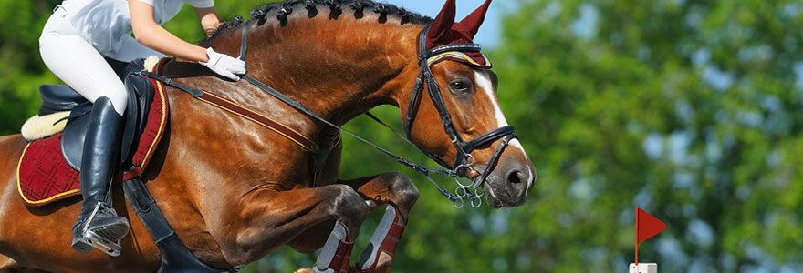 Equipements de chevaux et de cavaliers